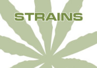 Group logo of 420Strains